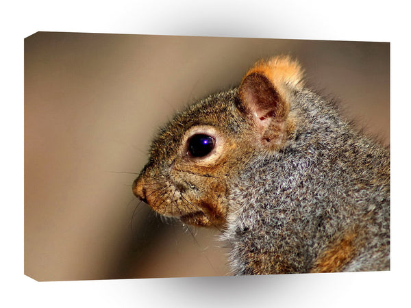 Squirrel Gerry A1 Xlarge Canvas