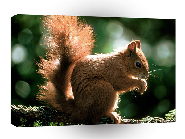 Squirrel Munch Time A1 Xlarge Canvas