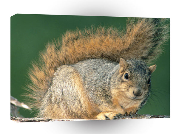 Squirrel Red A1 Xlarge Canvas