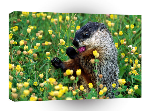 Squirrel Tasty Buds Woodchuck A1 Xlarge Canvas