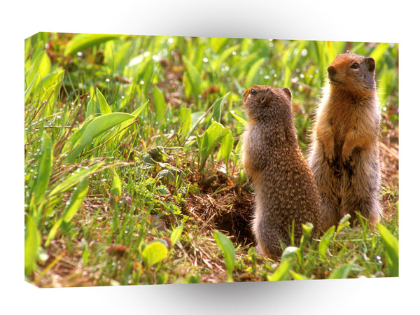 Squirrel Whats Happening Ground A1 Xlarge Canvas