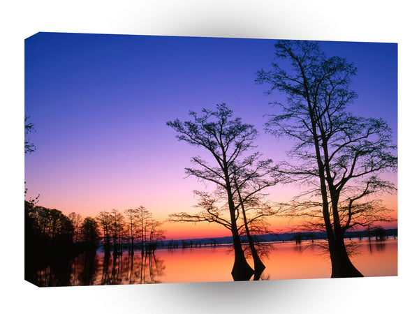 Sunrise Bald Cypress Trees Reelfoot A1 Xlarge Canvas