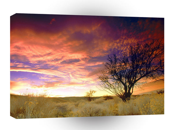 Sunset Almond Tree Antelope Valley A1 Xlarge Canvas