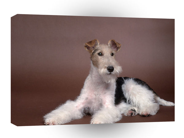 Terriers Perfect Pose Wirehaired Fox A1 Xlarge Canvas