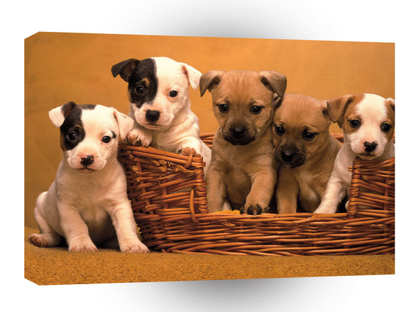 Terriers Pound Of Puppies A1 Xlarge Canvas