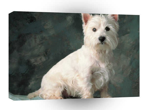 Terriers West Highland White A1 Xlarge Canvas