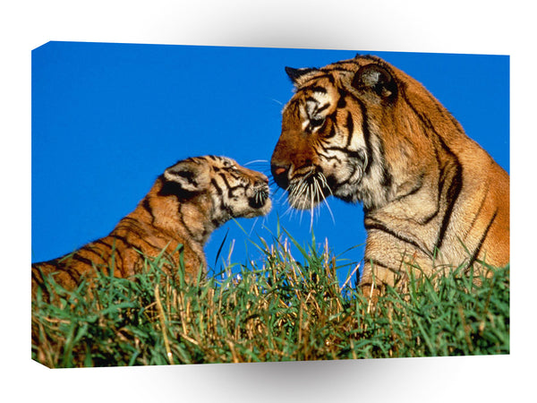 Tiger A Mothers Touch A1 Xlarge Canvas