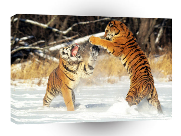 Tiger Cat Fight Siberian A1 Xlarge Canvas