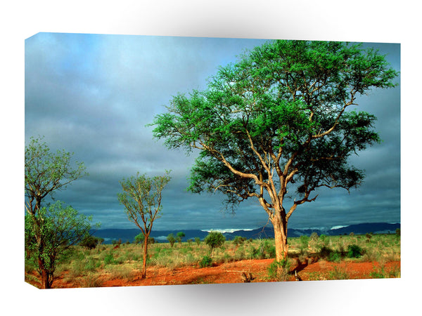 Tree African Landscape A1 Xlarge Canvas