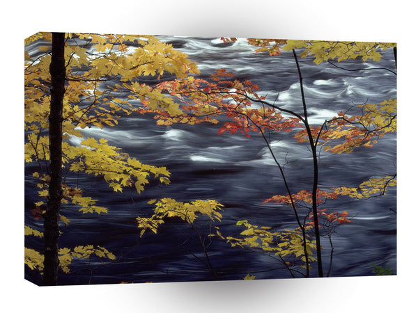 Tree Autumn A Rushing River A1 Xlarge Canvas