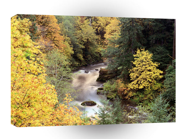 Tree Autumn Color Coquille River A1 Xlarge Canvas