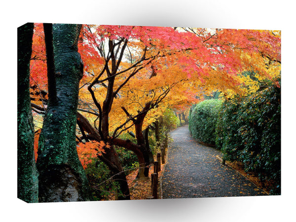 Tree Autumn Colors Japan A1 Xlarge Canvas