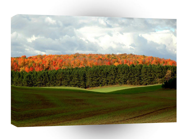 Tree Autumn Fields A1 Xlarge Canvas