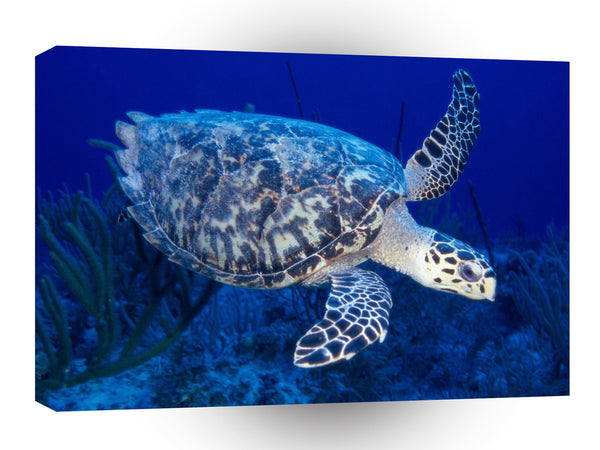 Turtle Hawksbill A1 Xlarge Canvas
