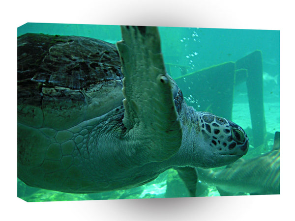 Turtle Underwater Flying A1 Xlarge Canvas