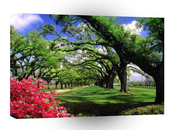 United States Boone Hall Plantation South Carolina A1 Xlarge Canvas