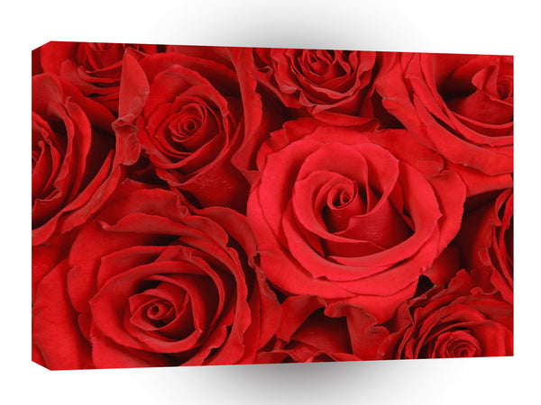 Valentines Day Budding Romance A1 Xlarge Canvas