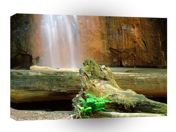 Waterfall Berry Big Basin Redwoods State Park A1 Xlarge Canvas