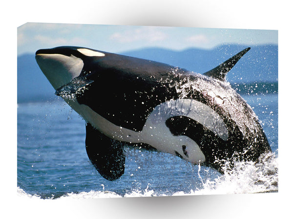 Whale Airbourne Orca A1 Xlarge Canvas