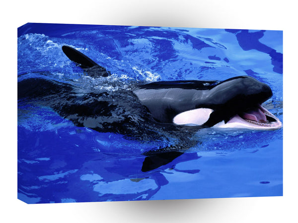 Whale Feed Me Killer A1 Xlarge Canvas