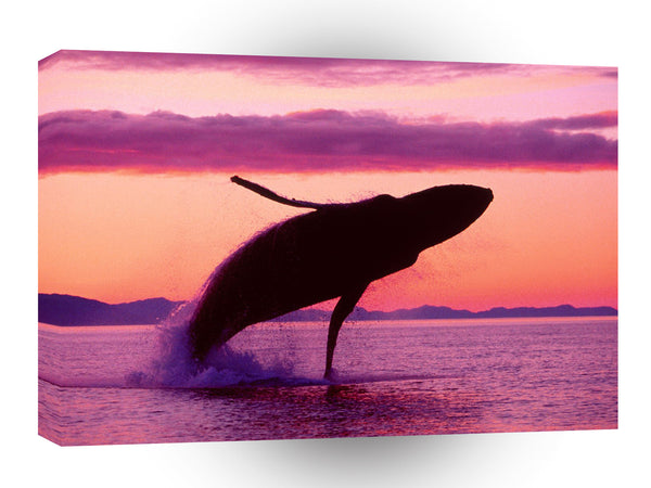 Whale Flight Humpback Alaska A1 Xlarge Canvas