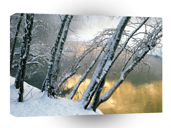 Winter Alder Trees Merced River Yosemite A1 Xlarge Canvas