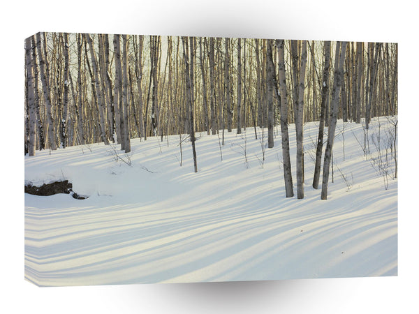 Winter Birch Aspen A1 Xlarge Canvas
