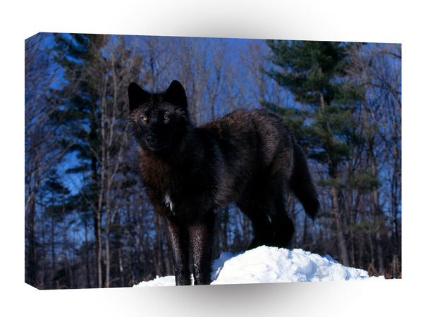 Wolf Black In Snow A1 Xlarge Canvas