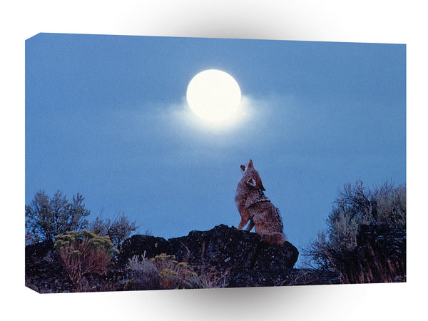 Wolf Coyote Howling Under Moon A1 Xlarge Canvas
