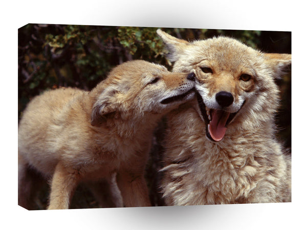 Wolf Coyote Mother And Pup A1 Xlarge Canvas