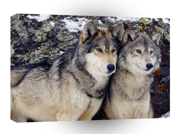Wolf Gray A1 Xlarge Canvas