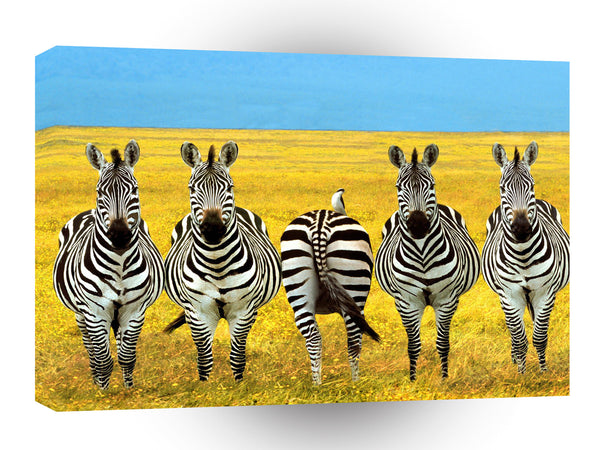 Zebra Dare To Be Different A1 Xlarge Canvas