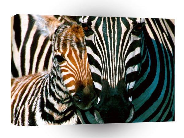 Zebra Natural Pattern A1 Xlarge Canvas