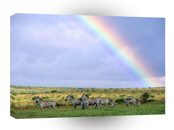 Zebra Rainbow Day A1 Xlarge Canvas