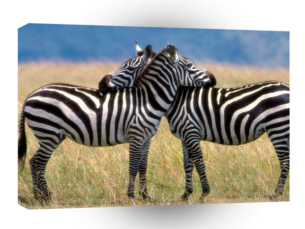 Zebra Serengeti Love Burchell A1 Xlarge Canvas