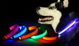LED Safety Collar for Dogs