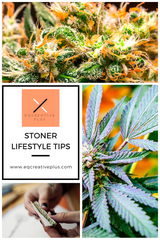 lifestyle tips and good habits for productive stoners