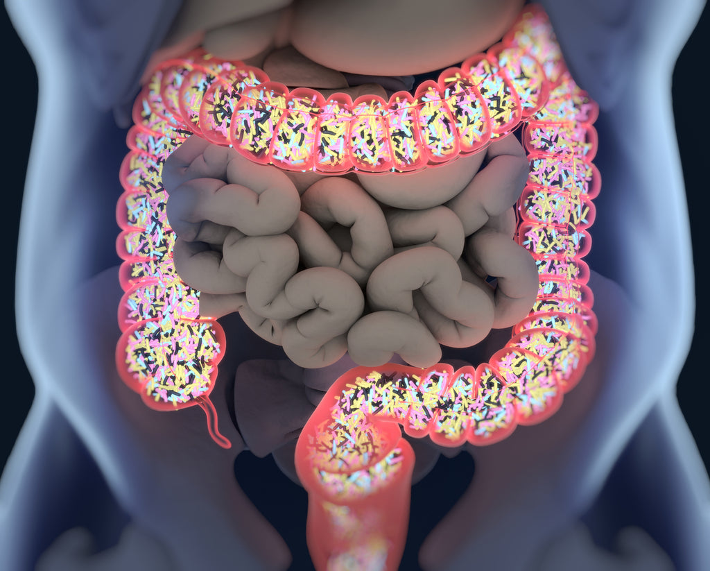 INSIDE THE FASCINATING AND SLIGHTLY CREEPY WORLD OF YOUR MICROBIOME
