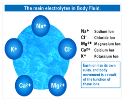The Essential Role of Electrolytes in Skeletal Muscle Contraction