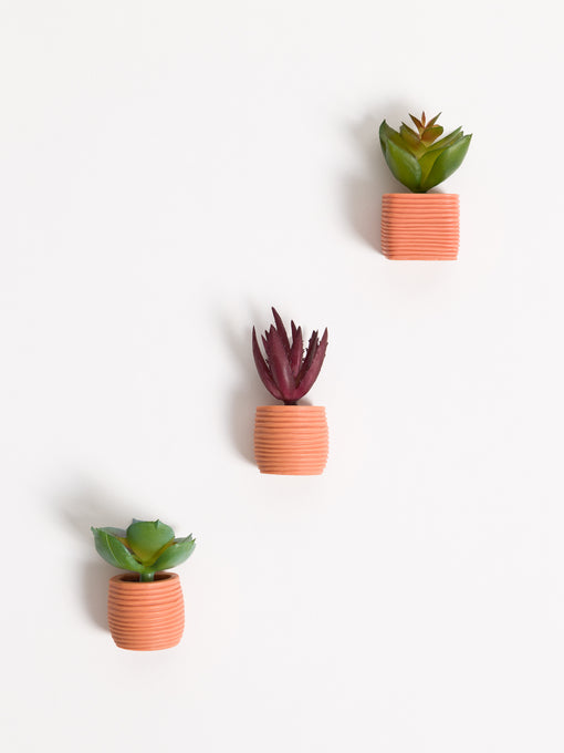Terracotta Succulent Magnets, Set of 3