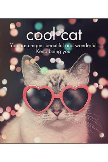 Cool Cat in Sunnies Card-NZ CARDS-Affirmations (NZ)-The Outpost NZ