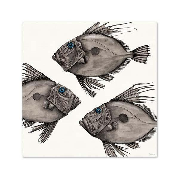John Dory Canvas By Joanne Webber
