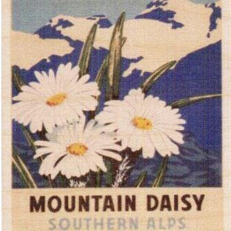 Ply Wood NZ Posters - Small-NZ ART-Abstract Designs (NZ)-Daisy-The Outpost NZ