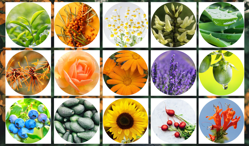 Botanicals In Your Garden & In Your Skincare