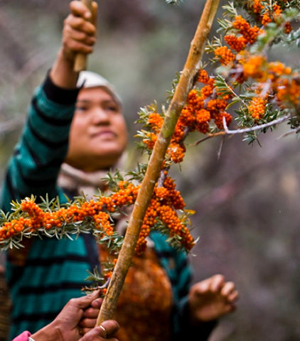 SWELL SKIN Sustainable Ethically Sourced Sea Buckthorn