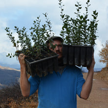 Our forest engineer in Portugal with two trays of saplings on his shoulders. Our eco friendly gifts plant the gift recipient trees every month.