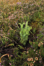 Bulk Tree Planting for Businesses - Scottish Highlands