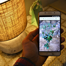 Here a man is looking at a tree photo on his smartphone. All of our eco friendly gifts deliver your tree photos to your mobile device.
