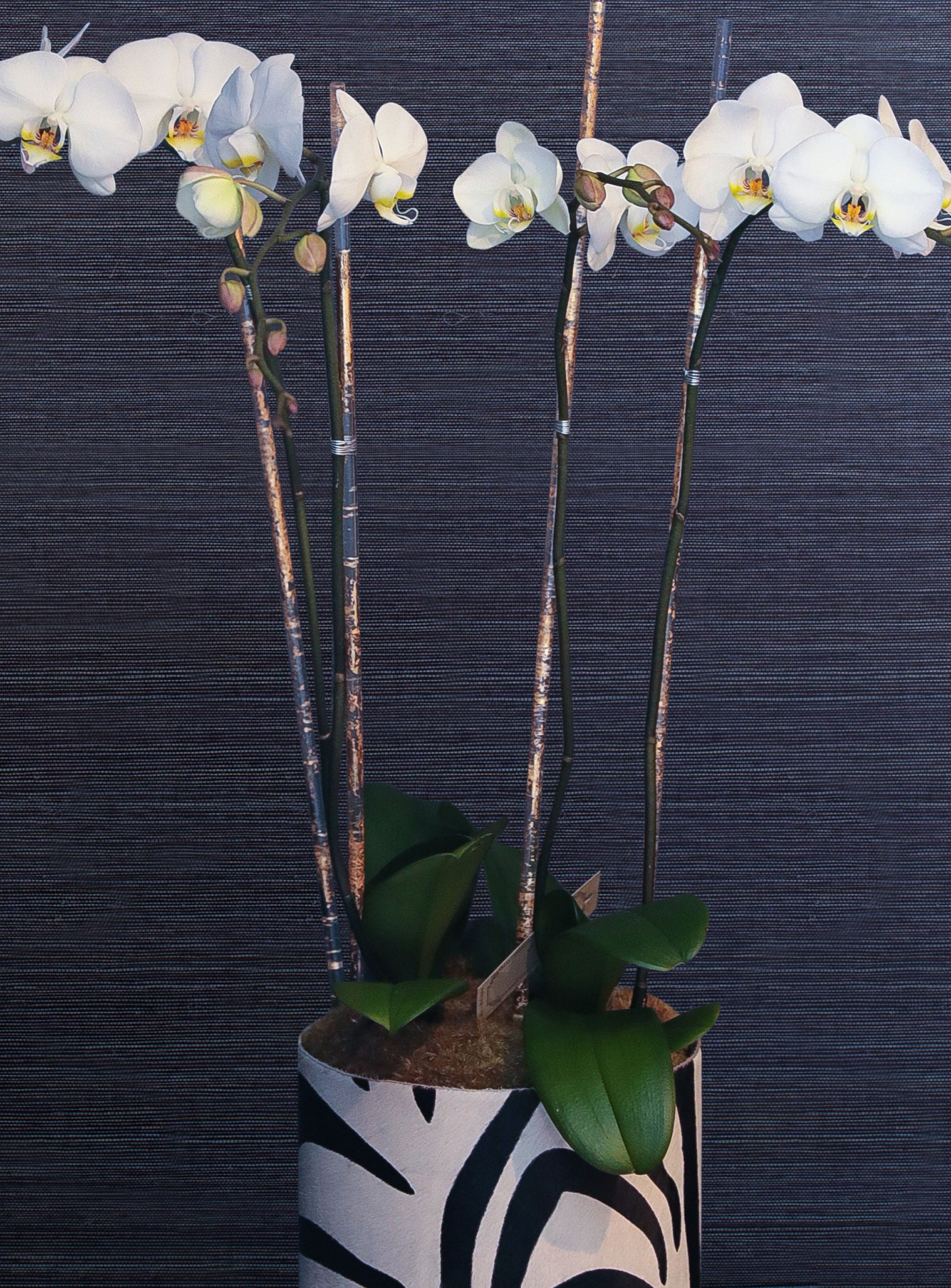 Valentine's Orchids
