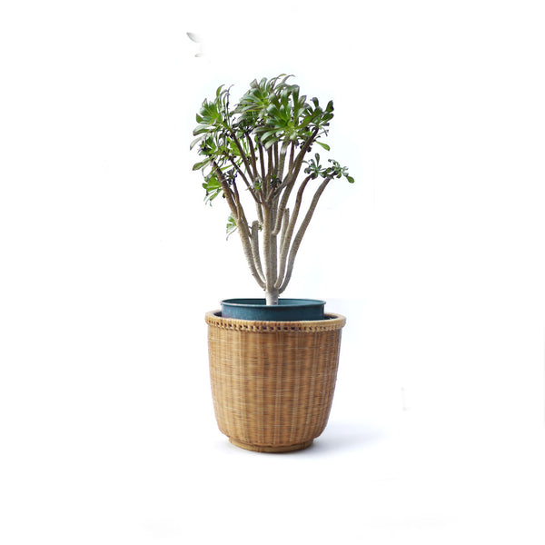 Vintage Boho Wicker Plant Basket